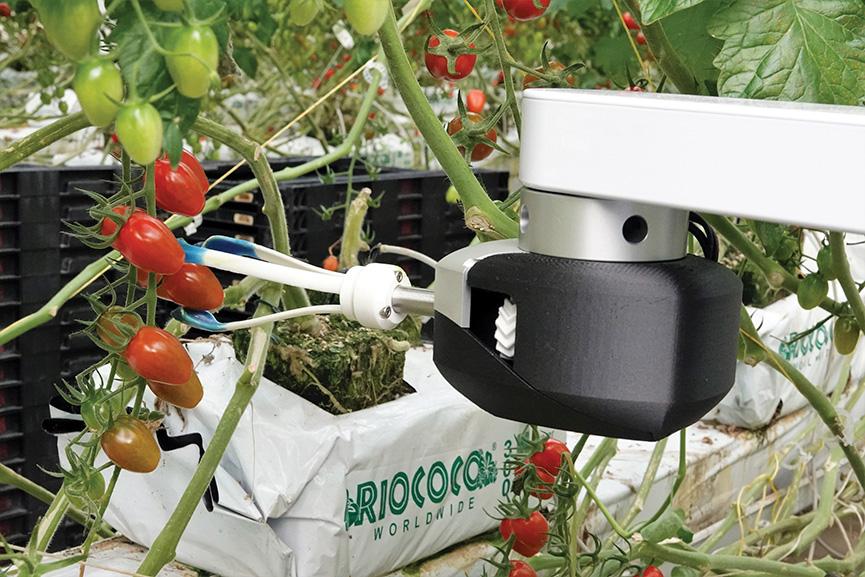 Sofistikované snímání počítačovým viděním, umělá inteligence a vlastní nástroje na konci ramene umožňují kolaborativnímu robotu SCADA sklízet zralé plody přímo ze stonku. Obrázek poskytla společnost Root AI/RIA