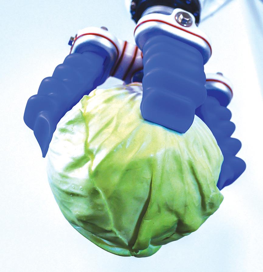 Chapače s měkkým úchopem mohou v dodavatelském řetězci manipulovat s potravinami různých velikostí a tvarů. Obrázek poskytla společnost Soft Robotics Inc./RIA